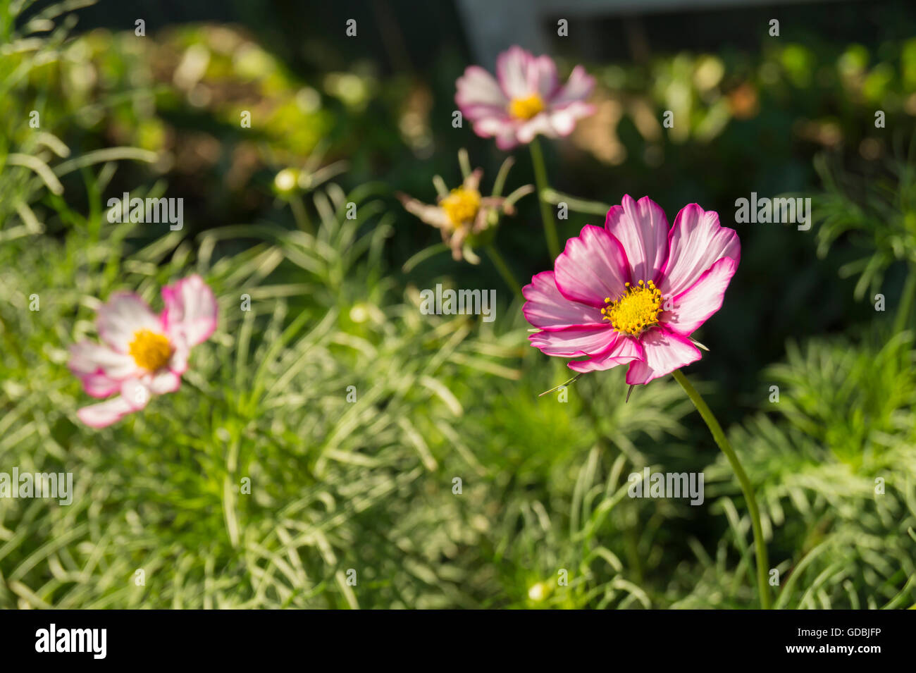 Beautiful flower grows on background green sheet and herbs - Stock Image