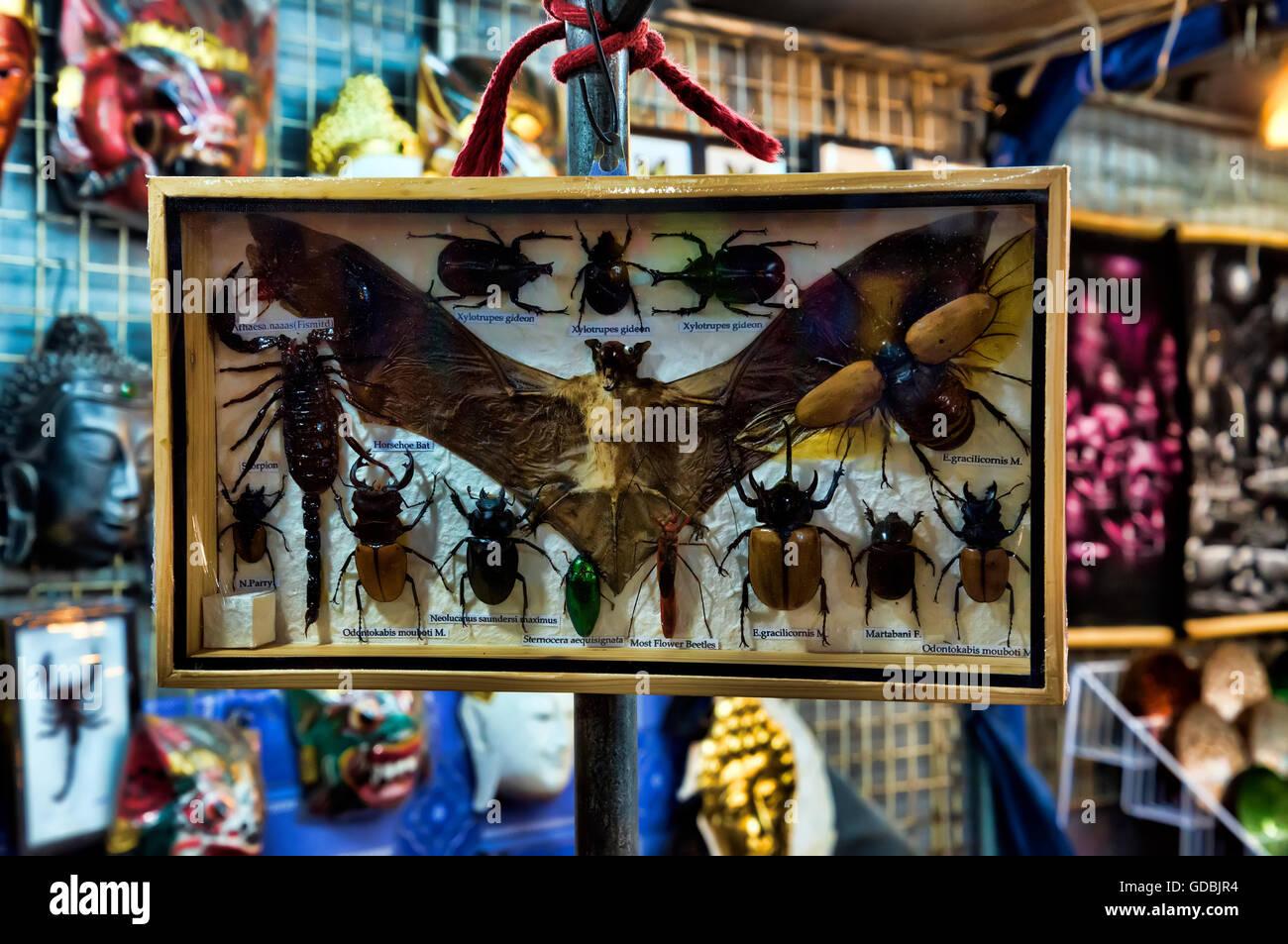 Insect and animal souvenirs, Hua Hin night market, Hua Hin, Thailand. - Stock Image