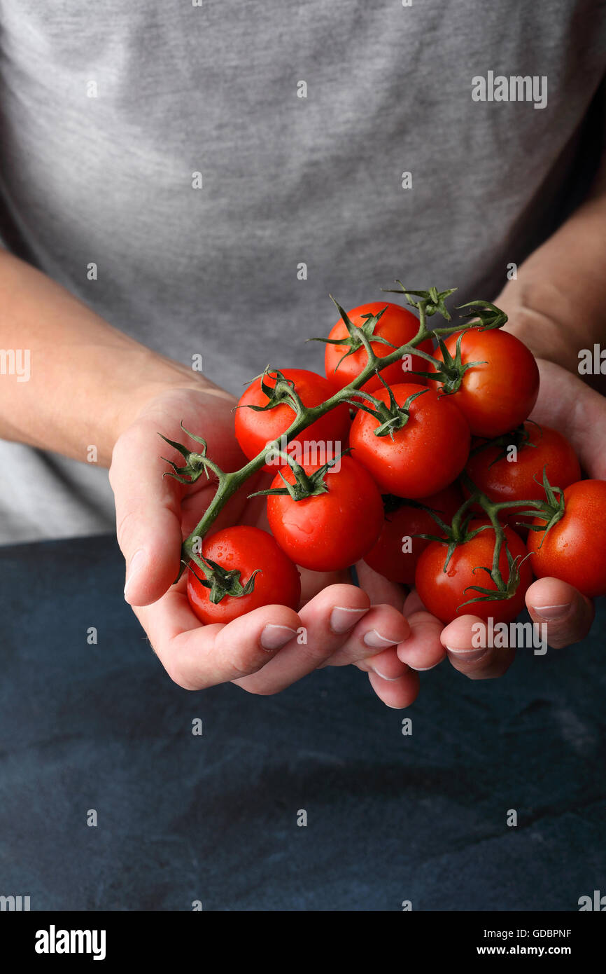 tomatoes in human hands, crop vegetables - Stock Image