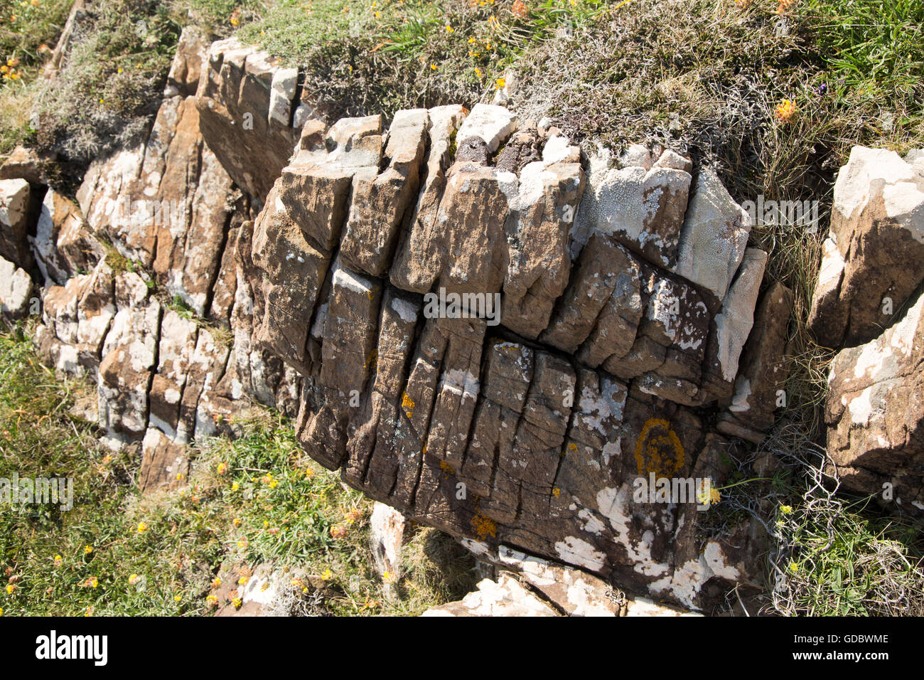 Joints in rock enlarged by weathering processes, Lizard peninsula, Cornwall, England,UK - Stock Image