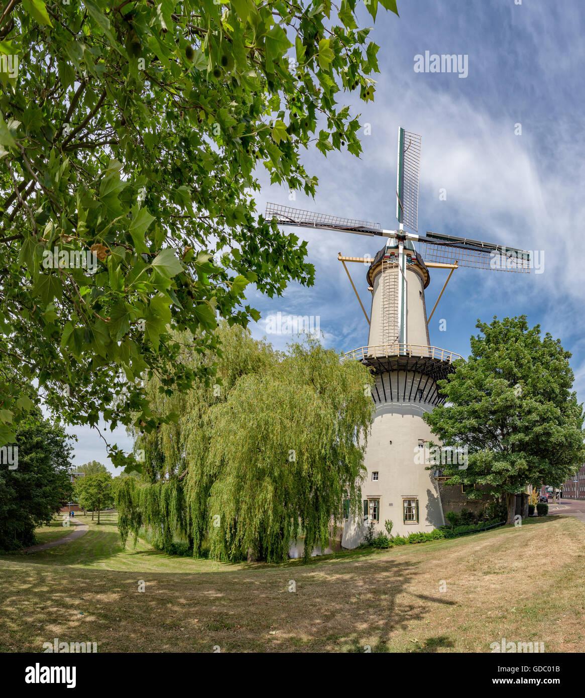 Schiedam,Tower mill The Three Cornflowers Stock Photo