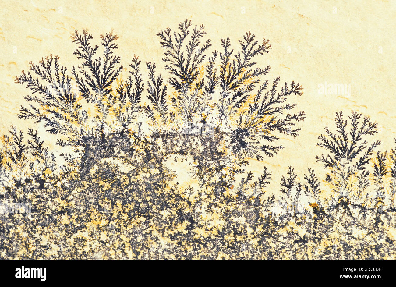 Manganese Dendrites, Branching Features containing Manganese Oxides found on Rock Surfaces - Stock Image