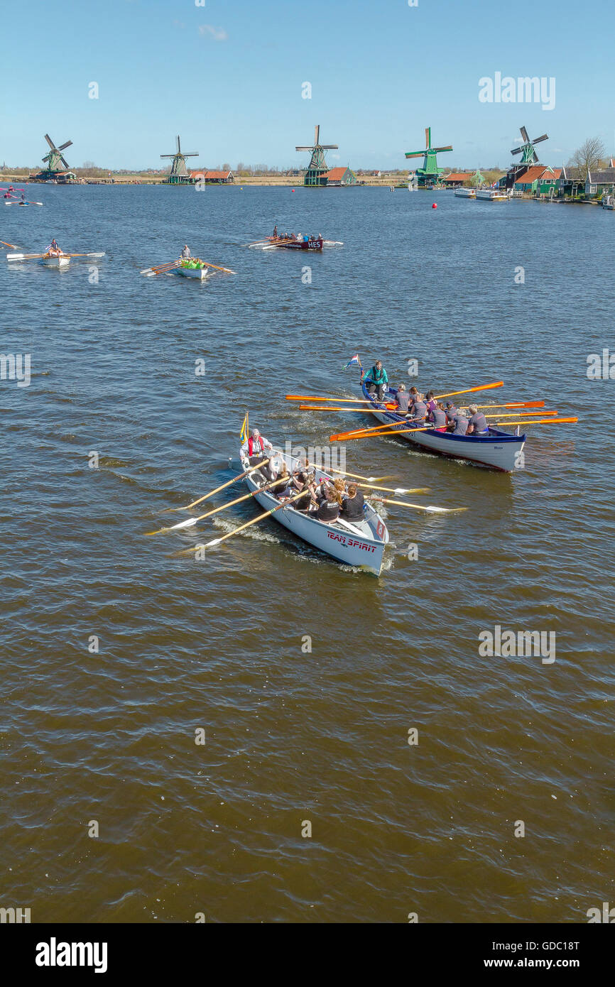 Rowing-match on the river Zaan near the windmills of the open-air museum Zaanse Schans - Stock Image