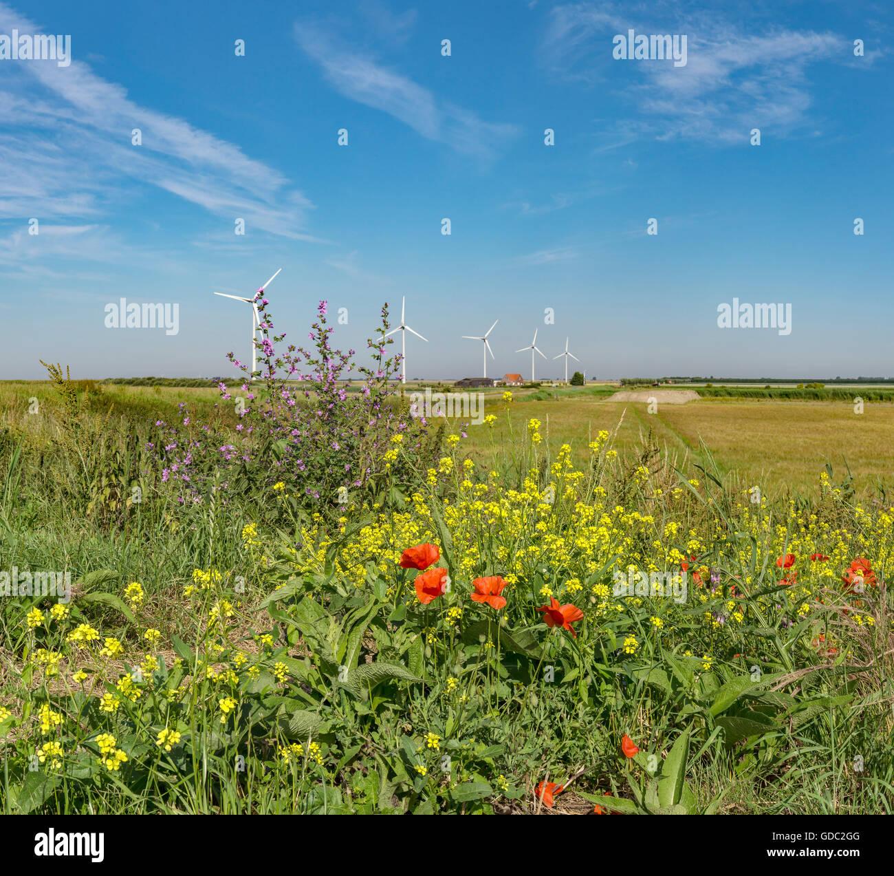 Anna Jacobapolder,Zeeland,Wind turbines - Stock Image