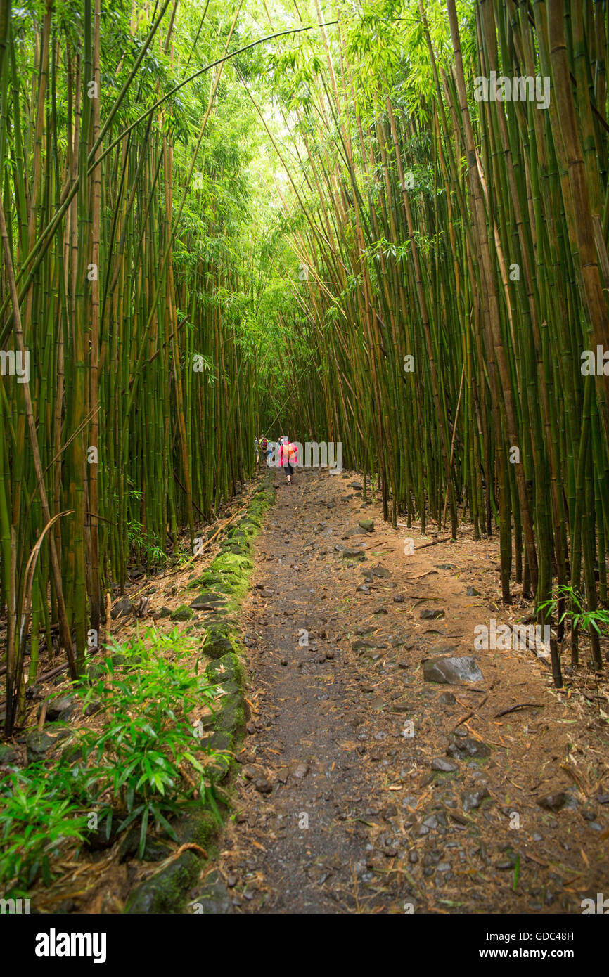 Maui,bamboo wood,Kipahulu,park,coast,historical site,USA,Hawaii,America,wood,forest,way,bamboo, - Stock Image