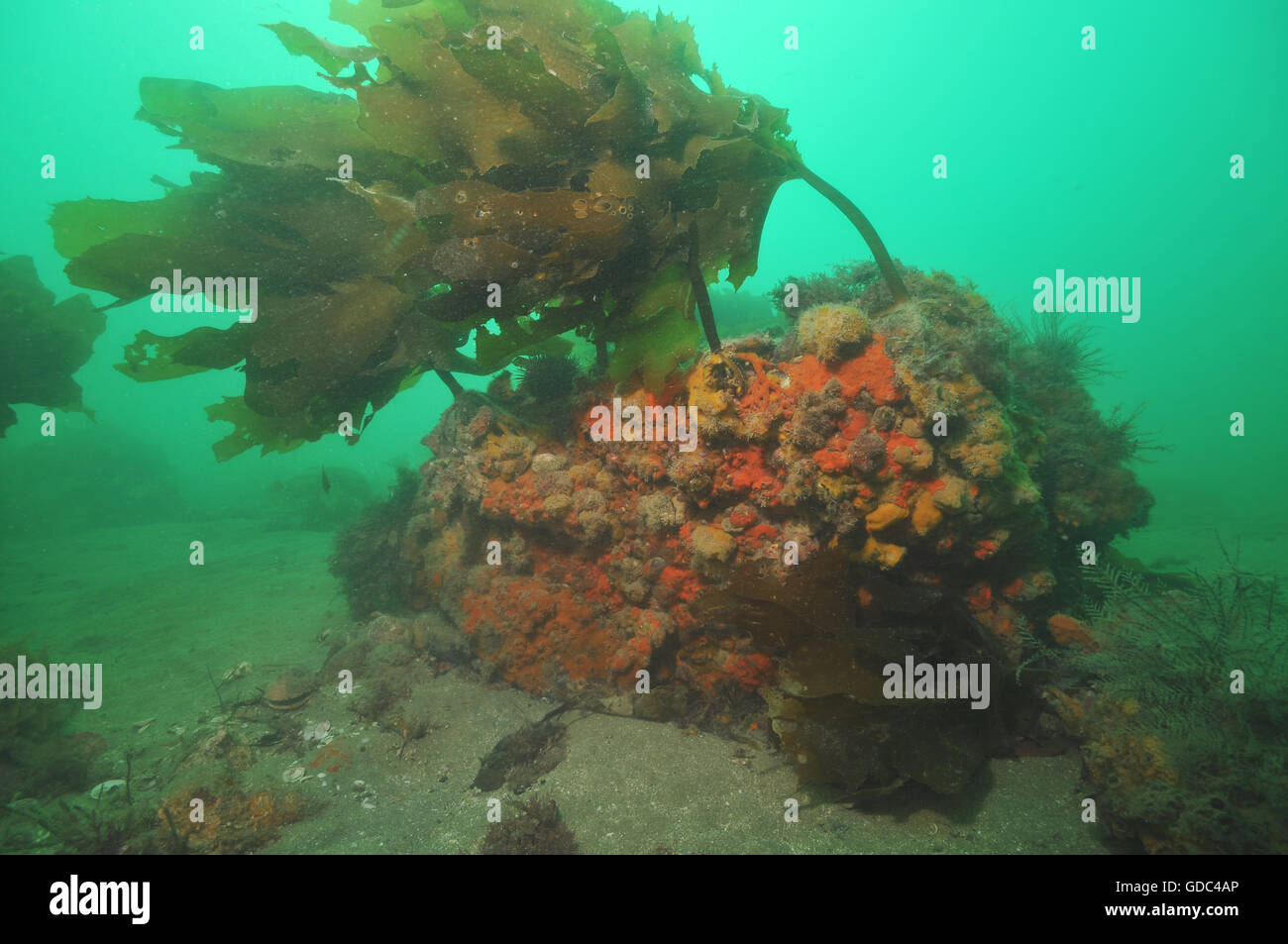 Rock with colourful invertebrate life in dim light. - Stock Image