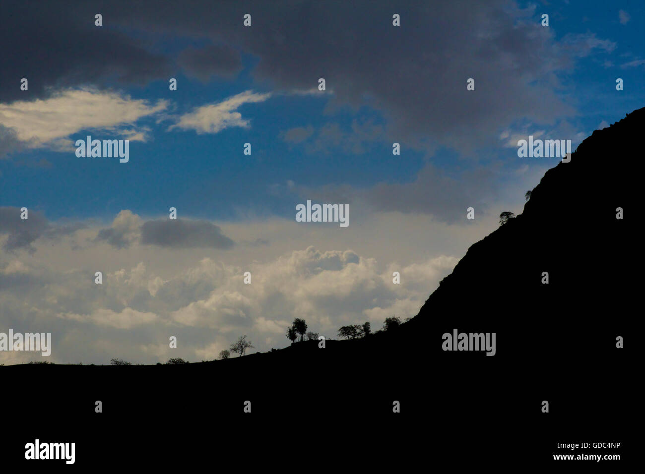 Silhouetted trees on a ridge against the sky. Simien mountains, Ethiopia. - Stock Image