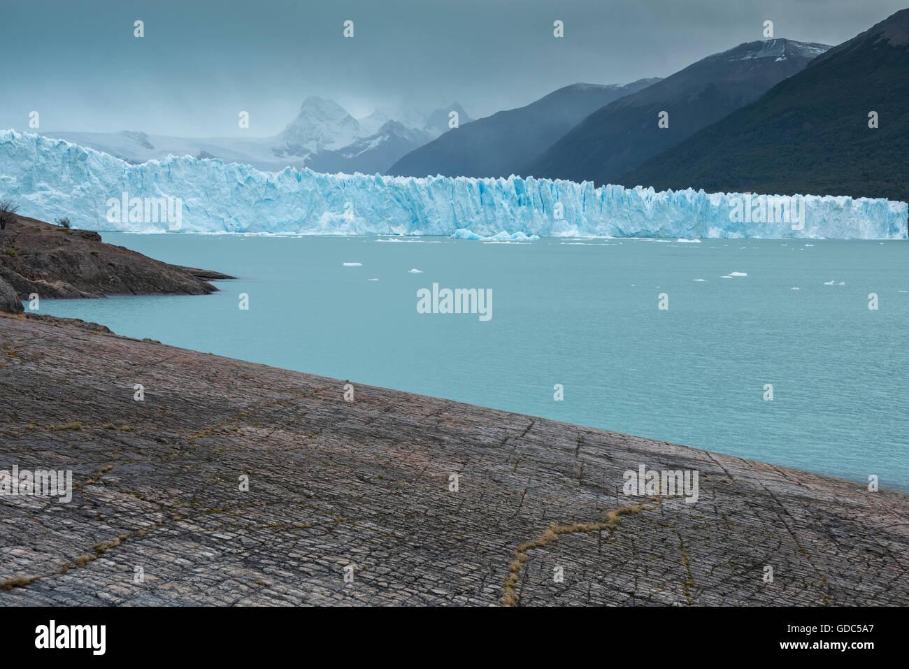South America,Argentina,Patagonia,Santa Cruz,Puerta Bandera,Los Glaciares,National Park,Perito Moreno Glacier,UNESCO,Wo - Stock Image