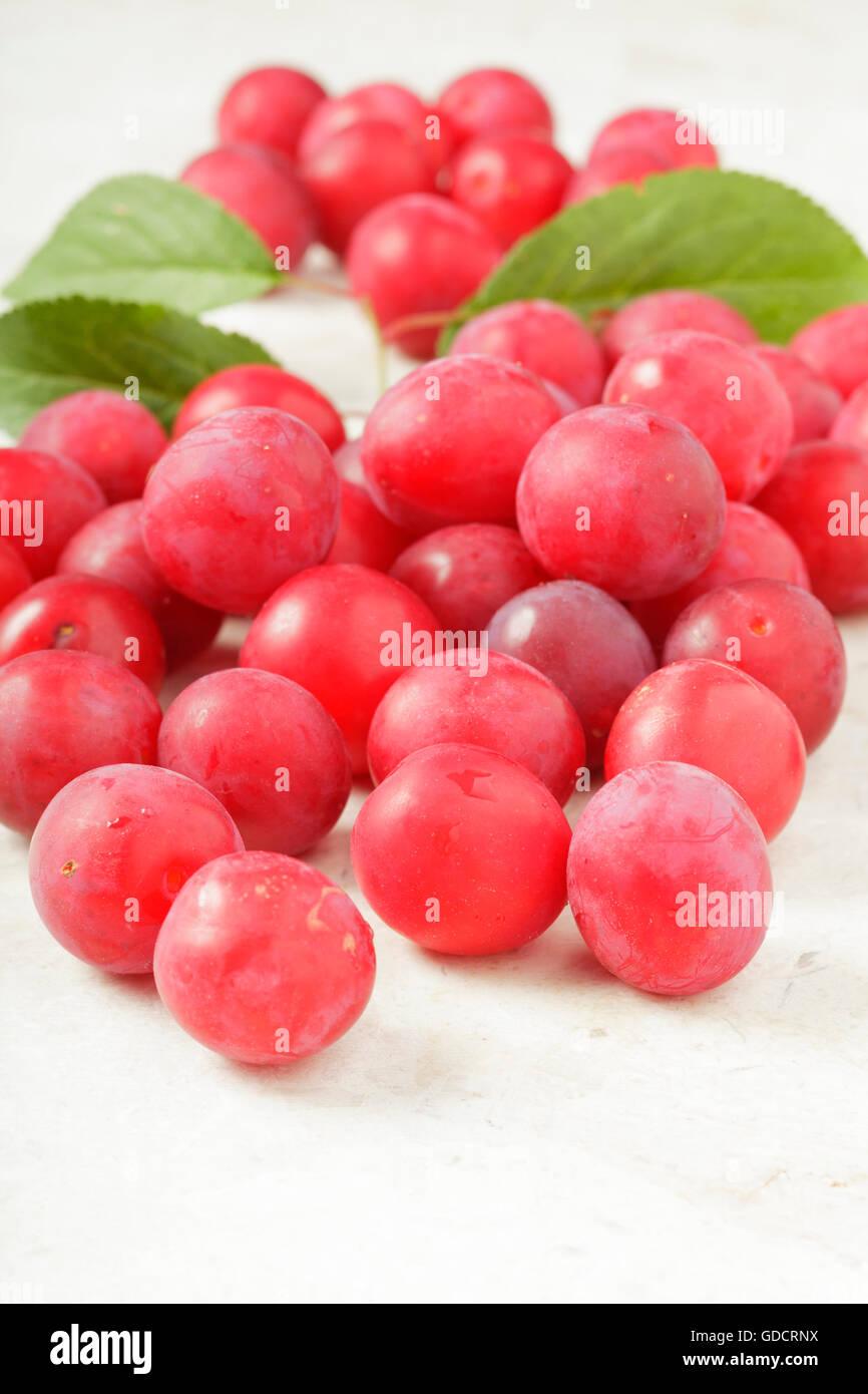 Cherry Plums Prunus cerasifera - Stock Image