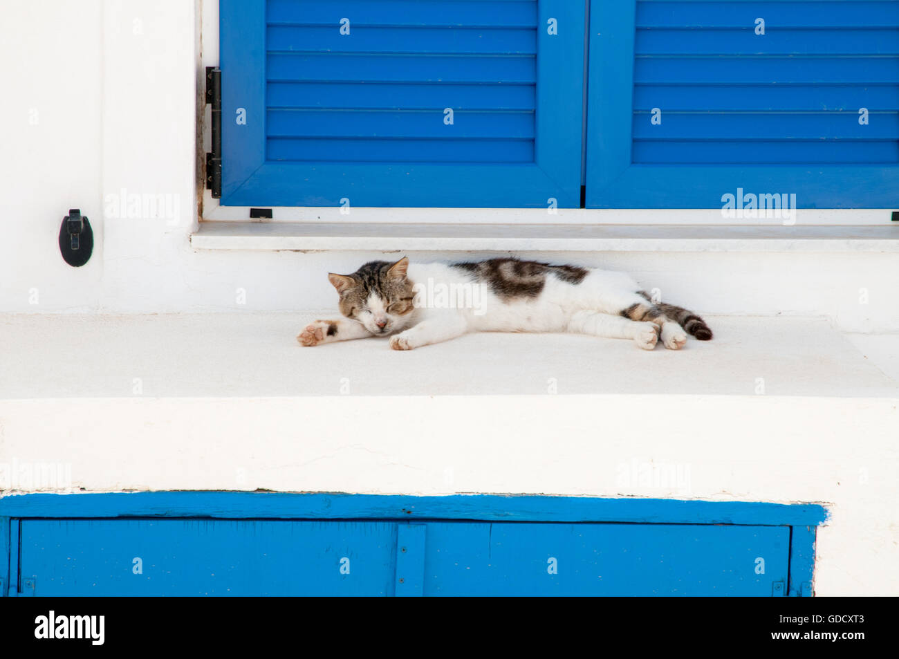 Cute stray cat on island of Thirasia, Greece - Stock Image