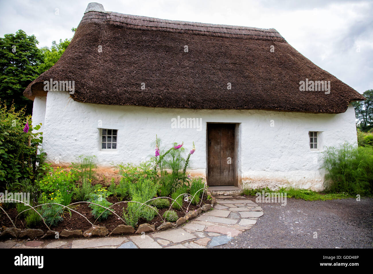 Reconstructed vernacular thatched cobb cottage at St Fagans the National History Museum in Cardiff South Wales UK - Stock Image