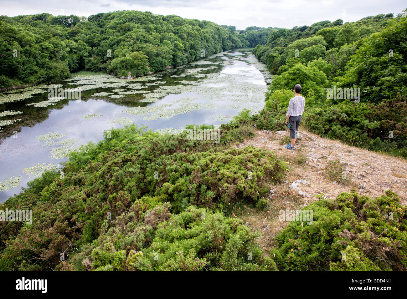 A woman looks out over Bosherston Lily Ponds a series of artificial lakes in wooded valleys of Pembrokeshire South - Stock Image
