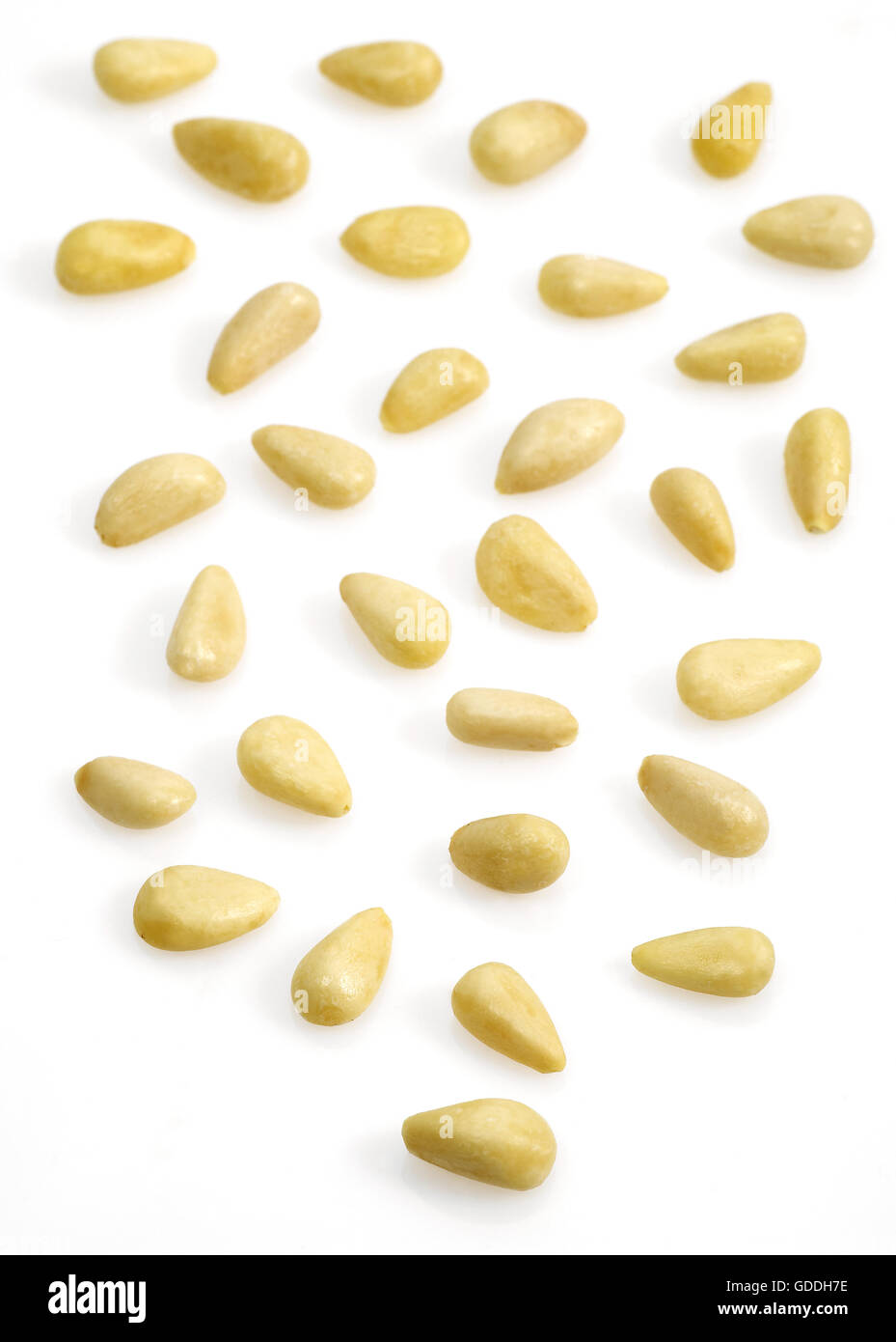 Pine Kernel or Pine Nut, pinus sp, Nuts against White Background - Stock Image