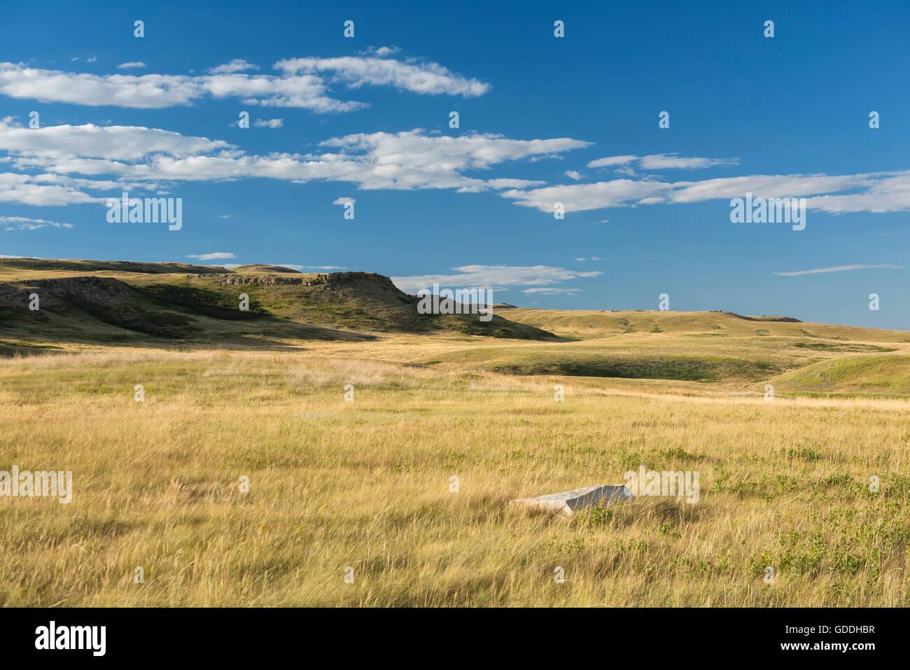 Grassland - Stock Image