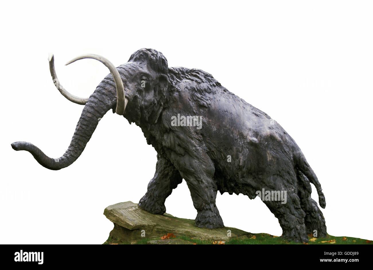Mammuthus Stock Photos & Mammuthus Stock Images - Alamy