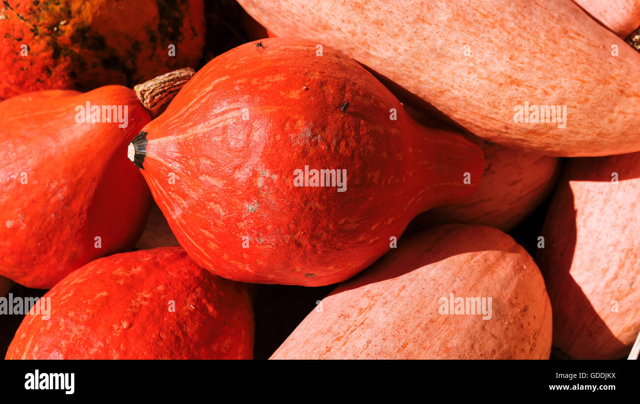 Ornamental pumpkins - Stock Image