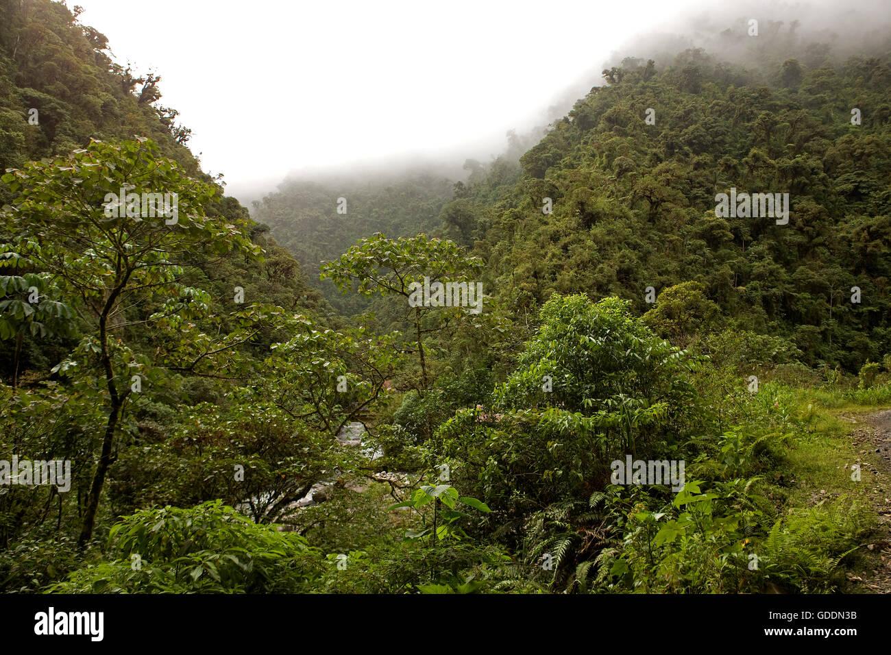 Rainforest in Manu National Park, Peru - Stock Image