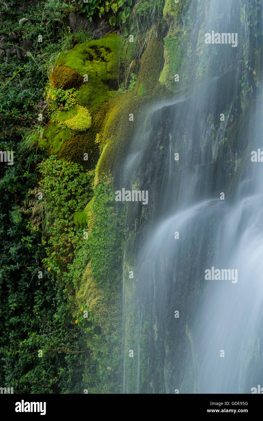 South America,Argentina,Patagonia,Rio Negro,Esquel,Waterfall in the,National Park Los Alerces - Stock Image