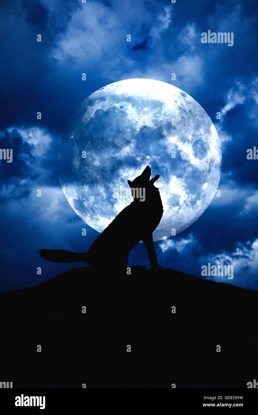 Wolf Howl Moon Stock Photos & Wolf Howl Moon Stock Images ...
