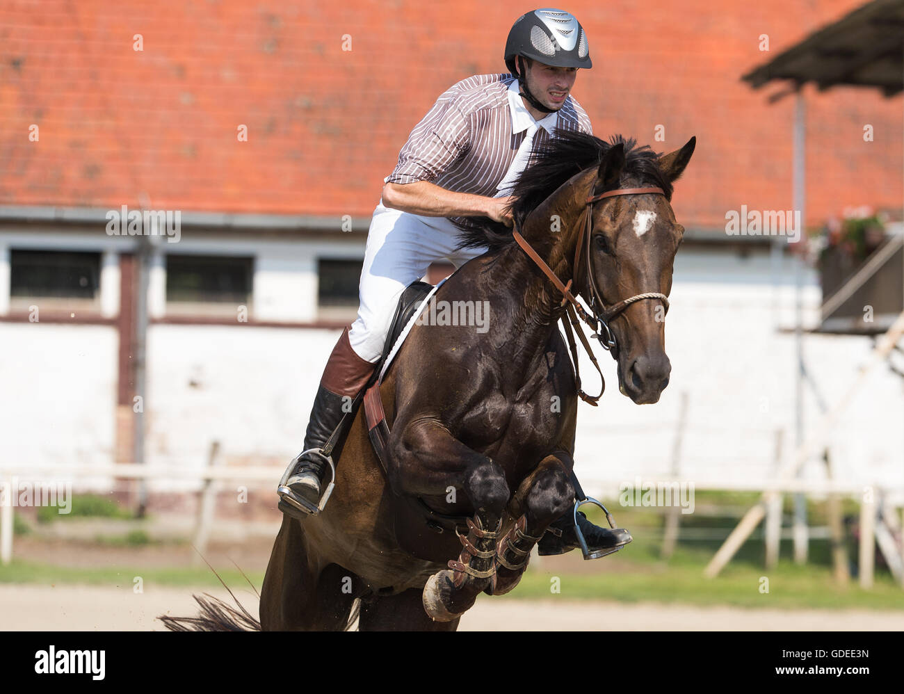 Young adult man riding a horse - Stock Image