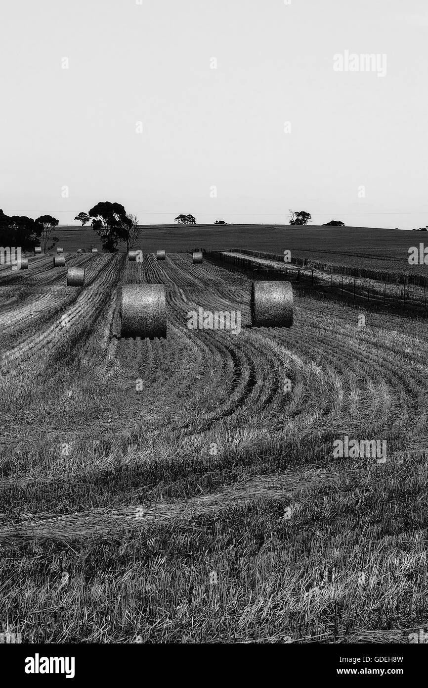 Hay bales in a rural setting Stock Photo