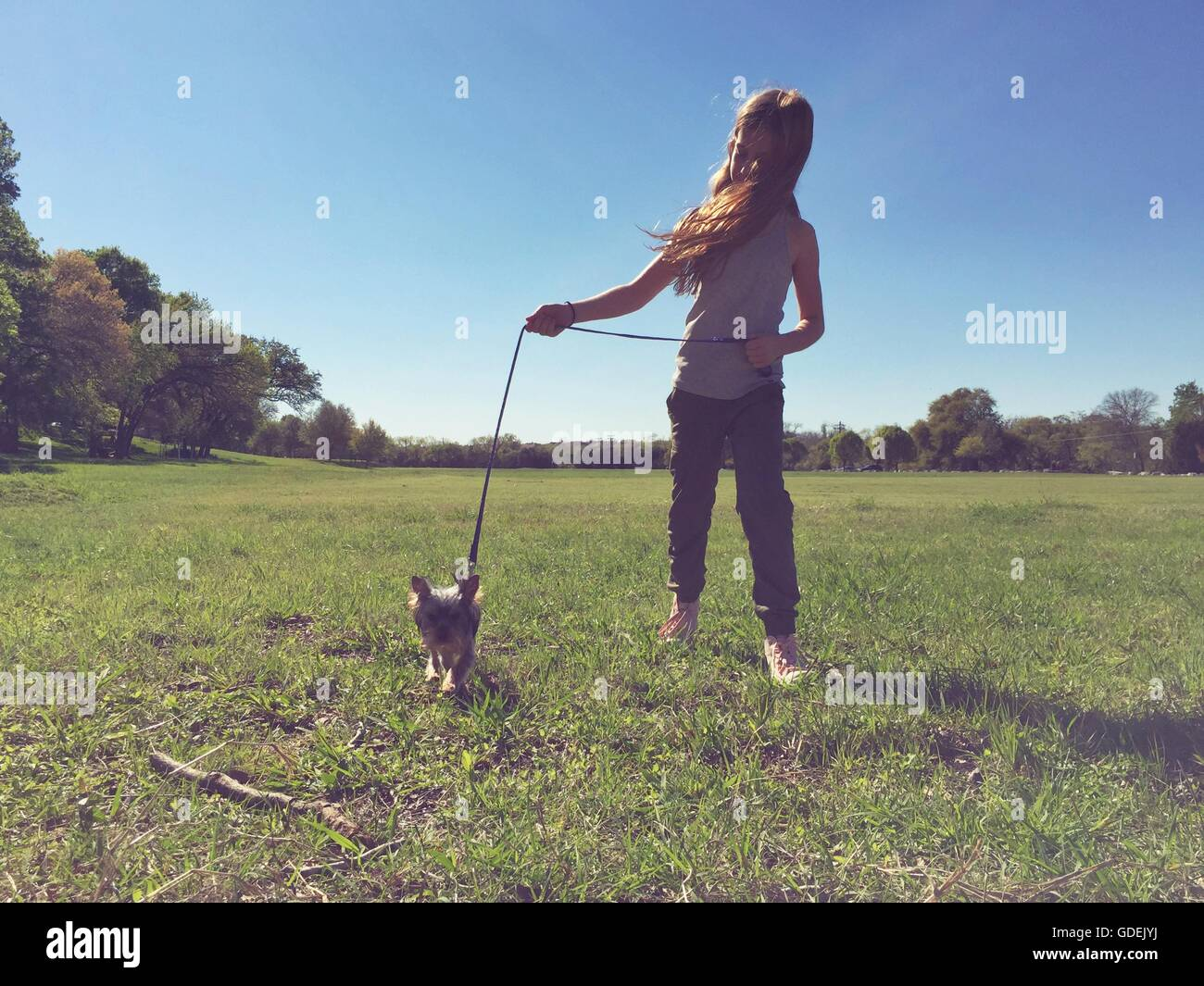 Girl walking small dog in park - Stock Image