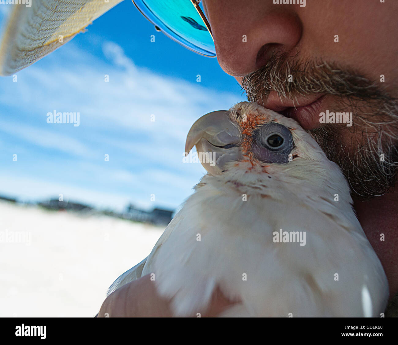 A man and his bare eyed cockatoo. - Stock Image