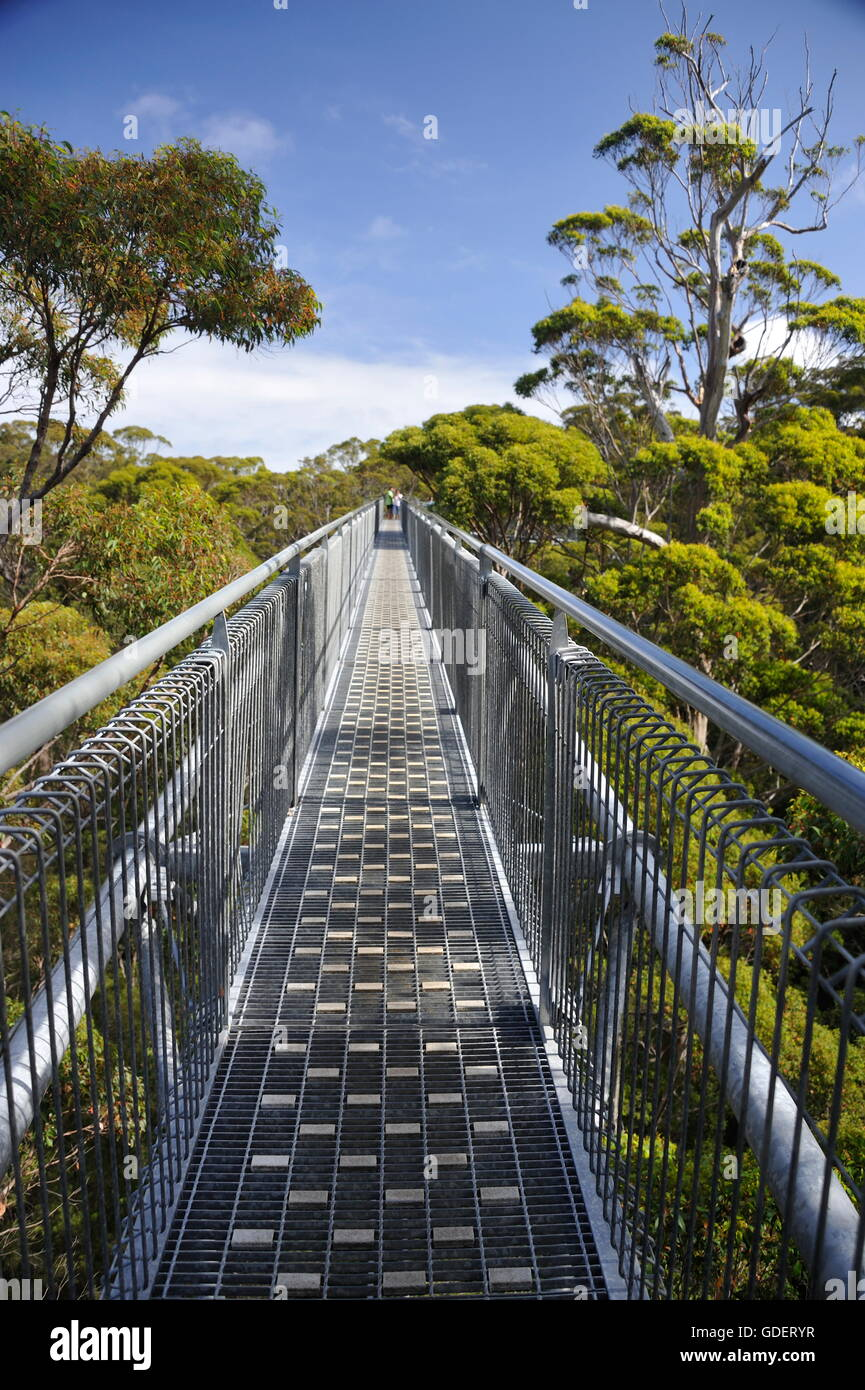 Tree Top Walk, Tingletrees Walpole Nornalup national park, Western Australia - Stock Image