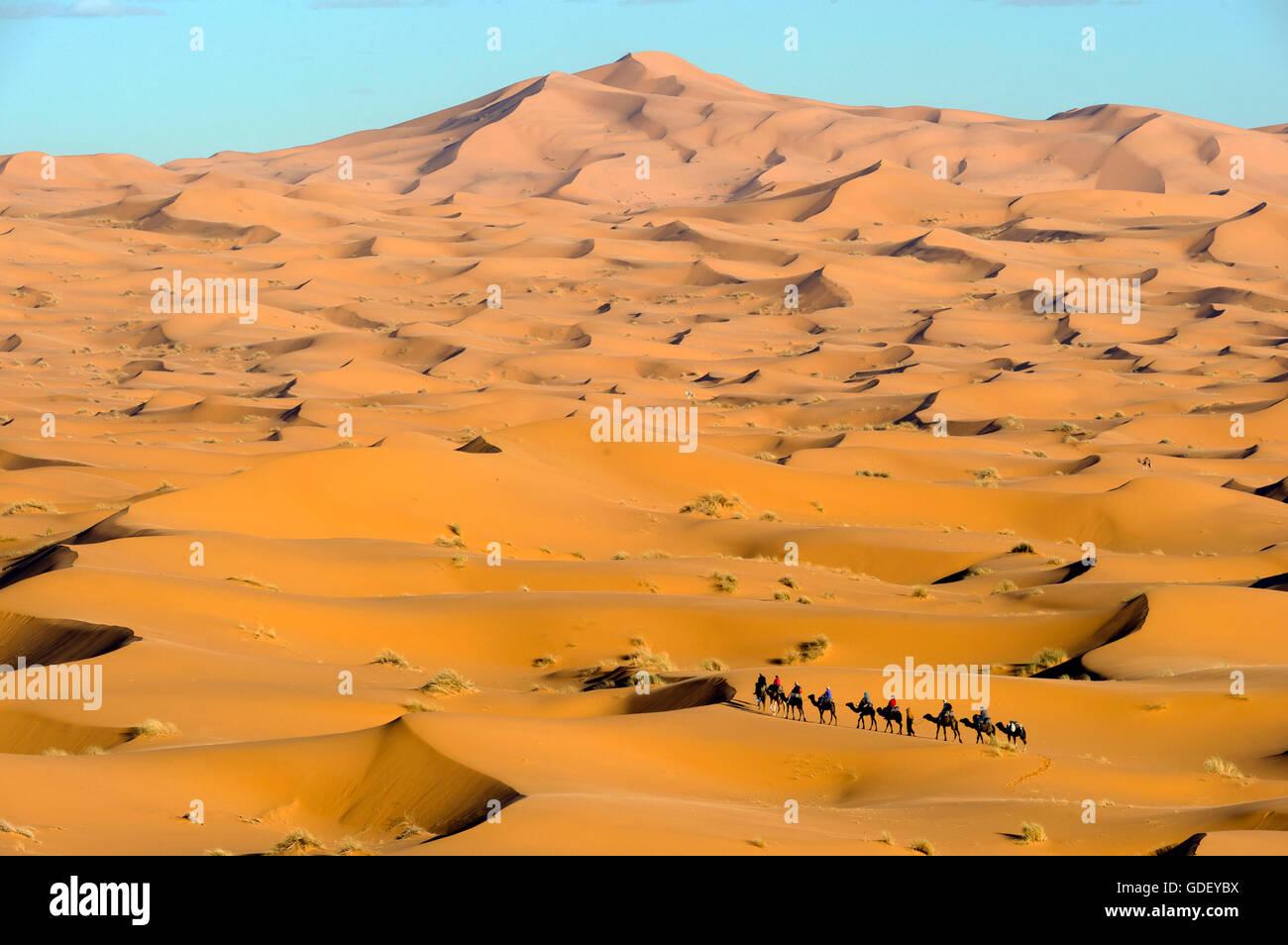 Marocco, Africa, cameleer, Desert Erg Chebbi, Dunes, - Stock Image