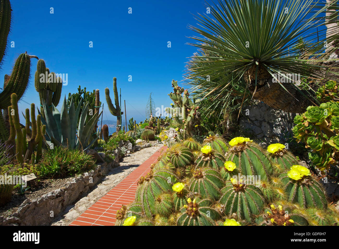 Jardin Exotique in Eze, Cote d?Azur, Alpes-Maritimes Stock Photo ...