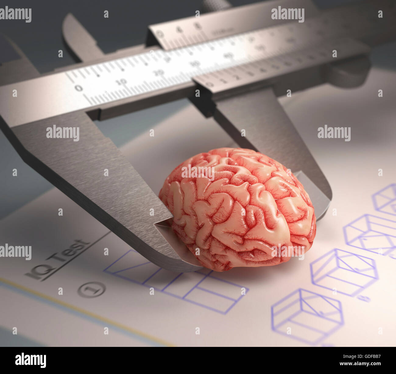 Calliper ruler measuring human brain, illustration. - Stock Image