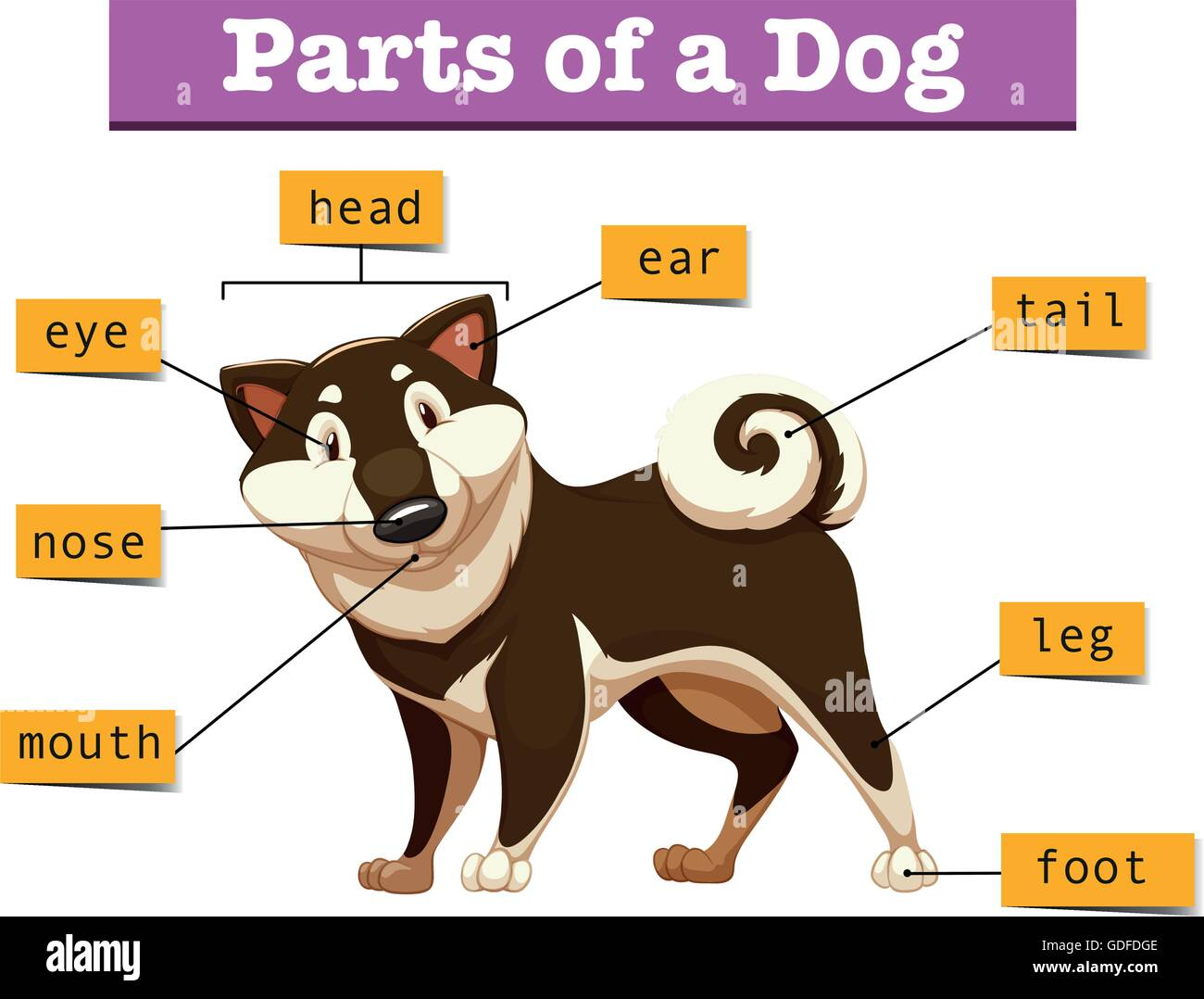 Diagram showing different part of dog illustration stock vector art diagram showing different part of dog illustration ccuart Choice Image