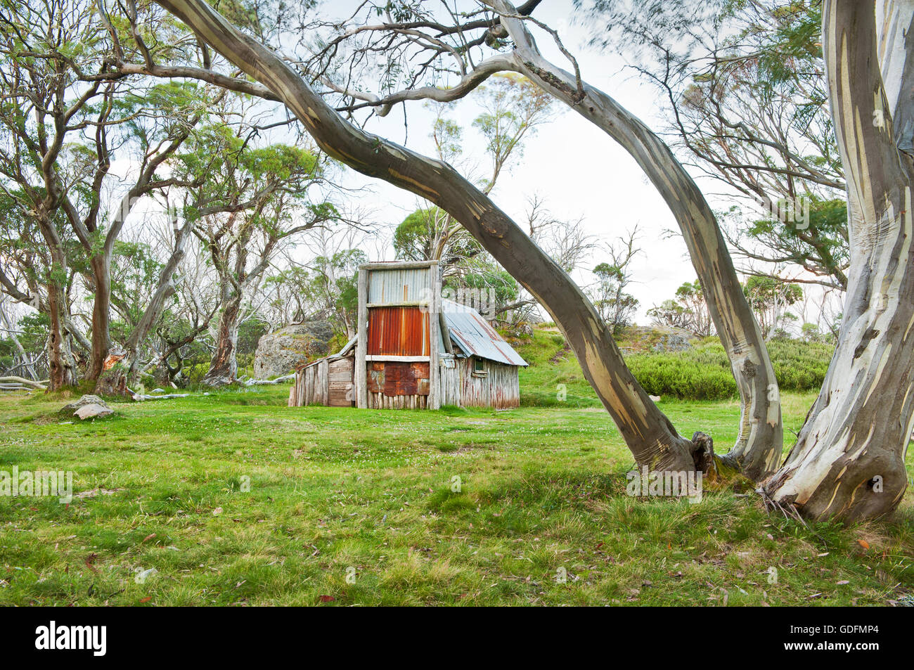 Wallaces Hut in a grove of snow gums. - Stock Image