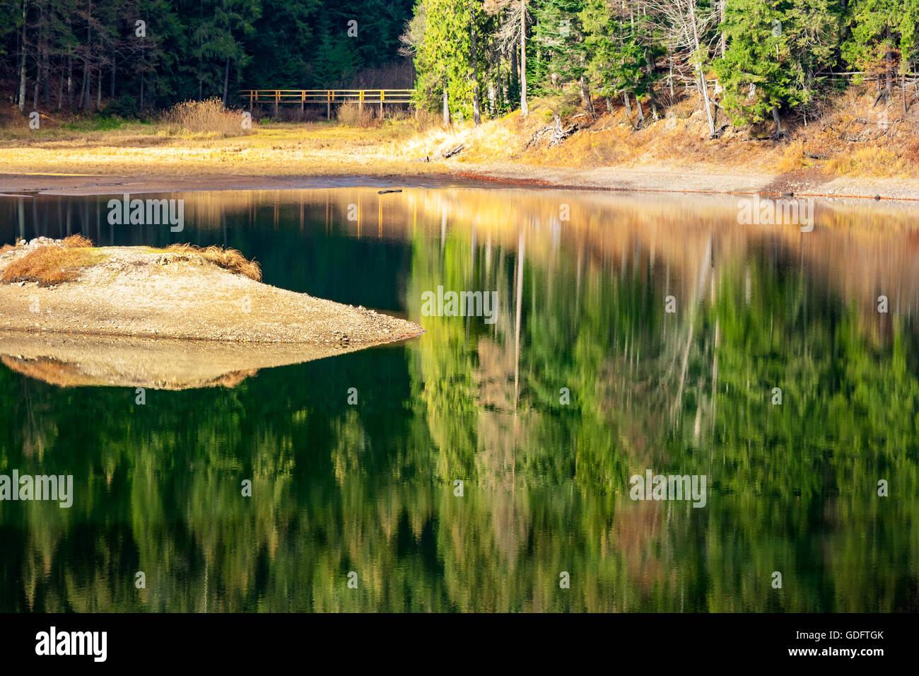 reflection of conifer forest in the mountain lake with shore full of yellow foliage in autumn - Stock Image