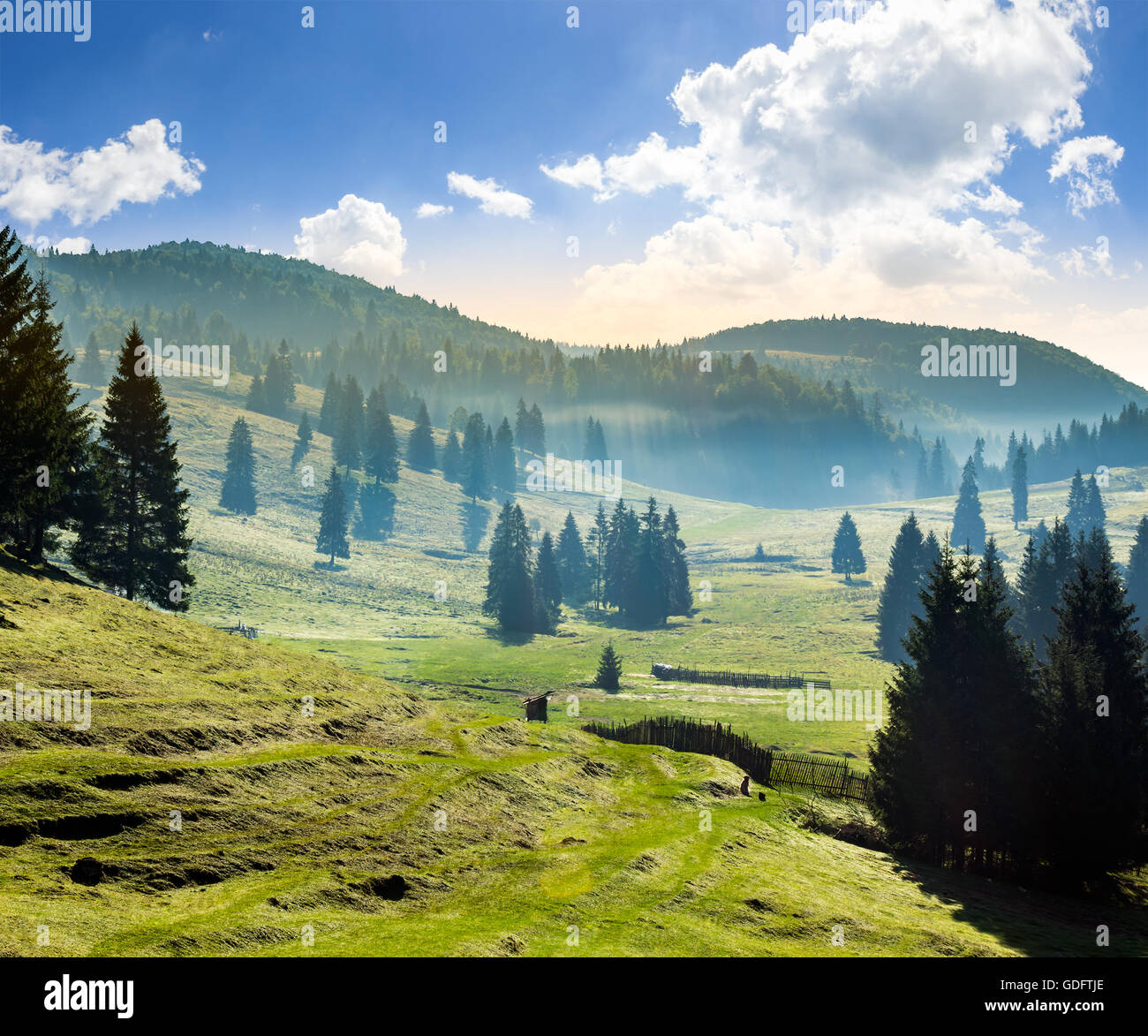 cold fog in conifer forest in  mountains of Romania in morning light - Stock Image