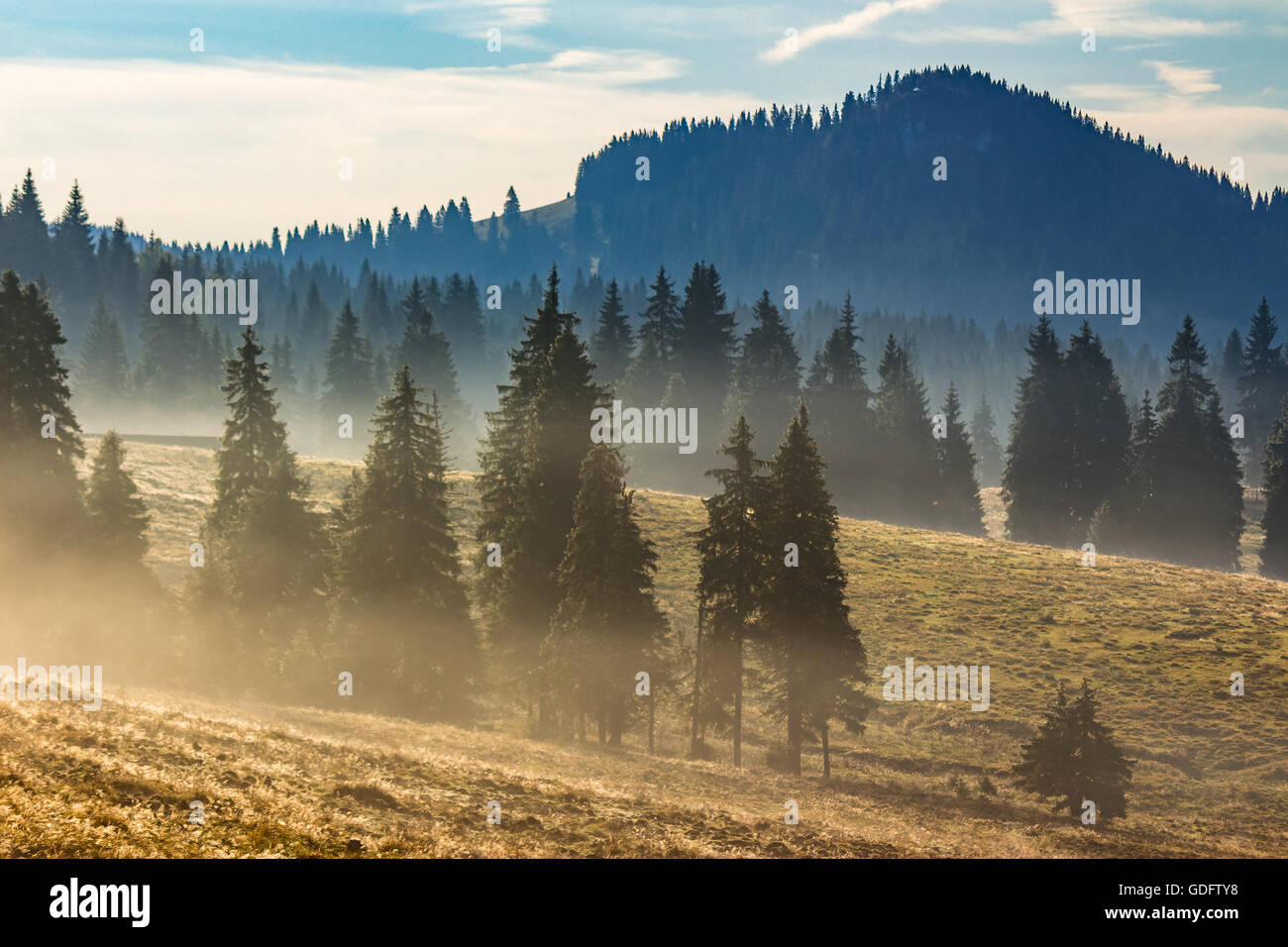 cold morning fog with hot sunrise in conifer forest in  mountains of Romania - Stock Image