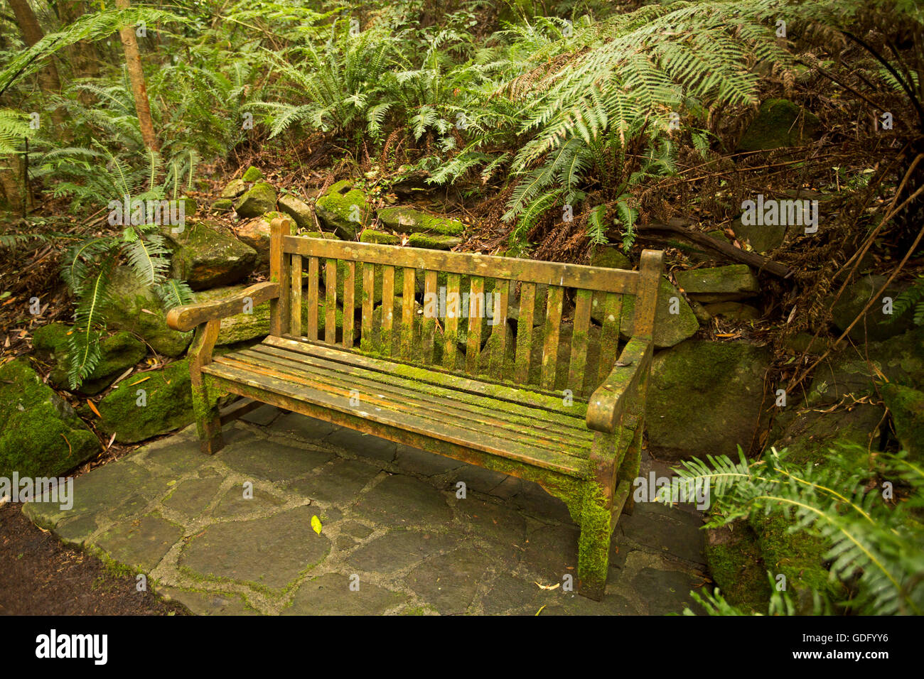 Decorative wooden garden bench covered with green lichen and Stock ...