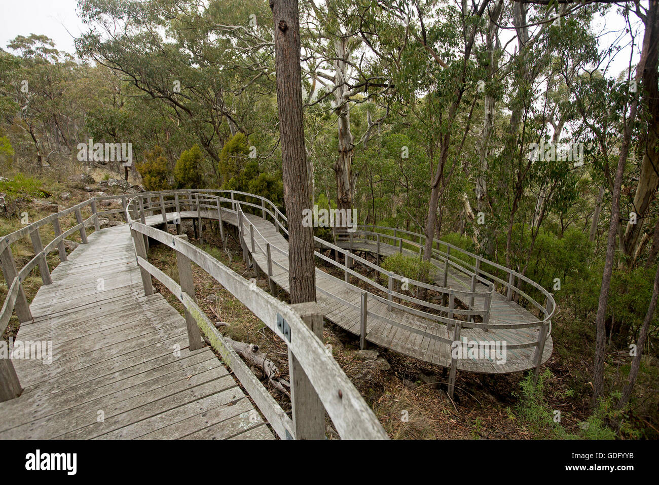 Unique curved wooden boardwalk snaking through forest above rocky hillside to protect environment & provide access Stock Photo