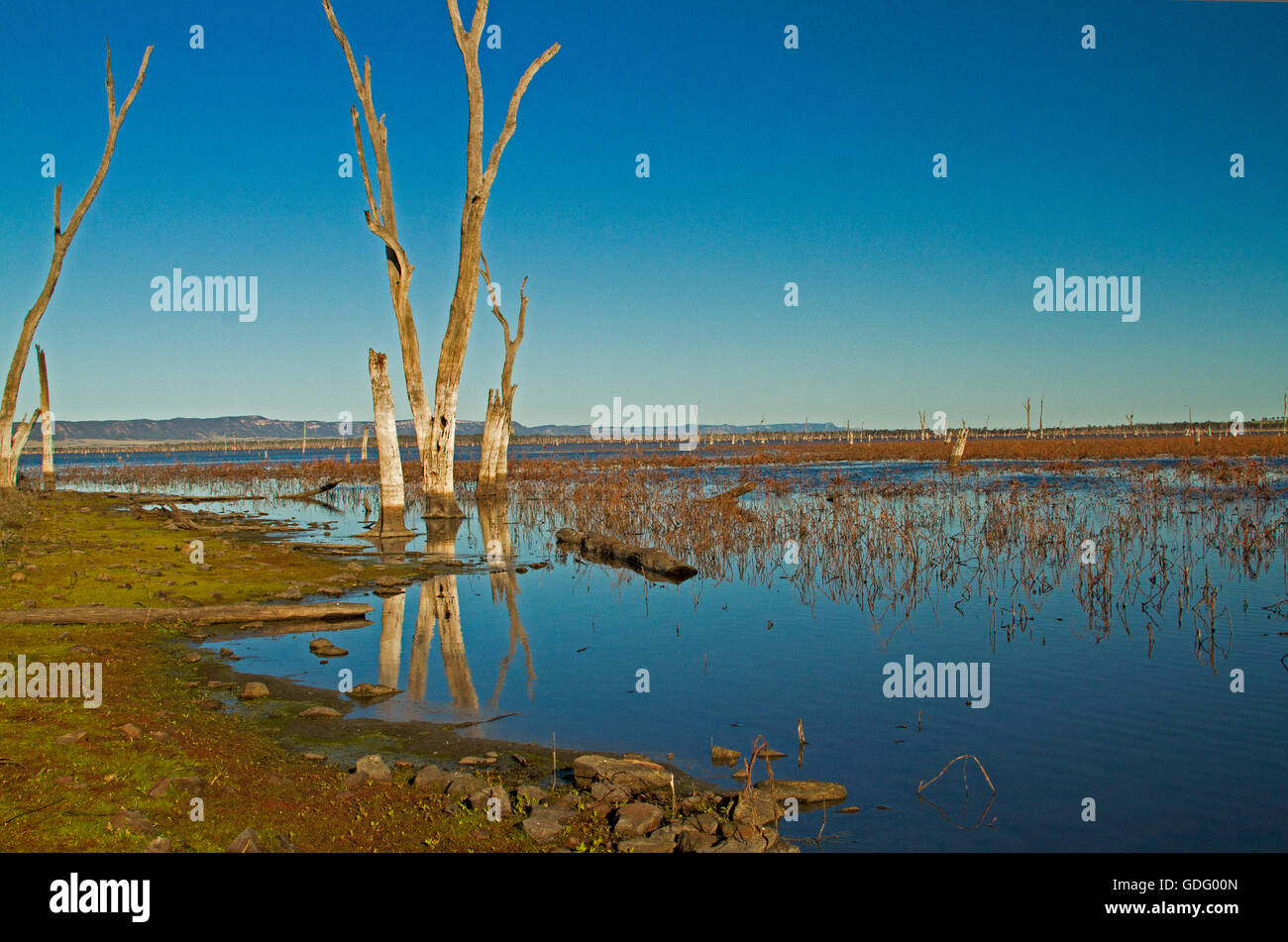 Vast calm blue waters of Lake Nuga Nuga with dead trees reflected in mirror surface under blue sky in outback Qld Stock Photo