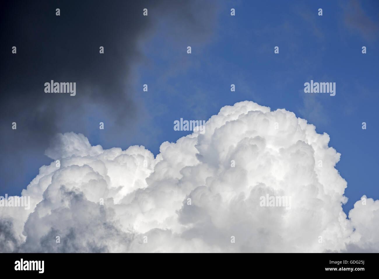 Cumulus congestus / towering cumulus cloud and black rain cloud covering the blue sky Stock Photo