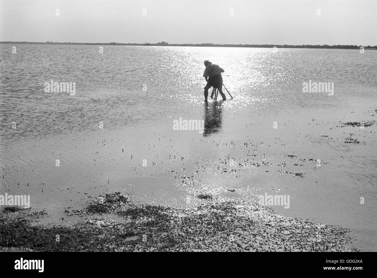 Roman Vishniac, collecting and filming biological samples, 1961 - Stock Image