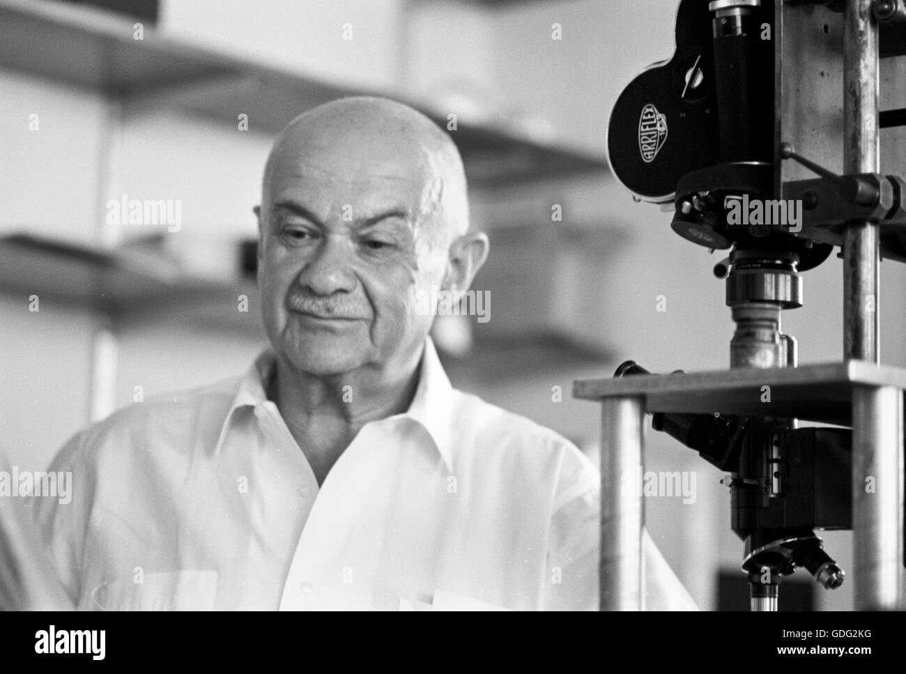 Roman Vishniac working in his lab, 1961 - Stock Image