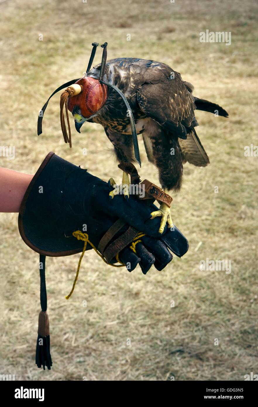 Falconry ancient training Stock Photo