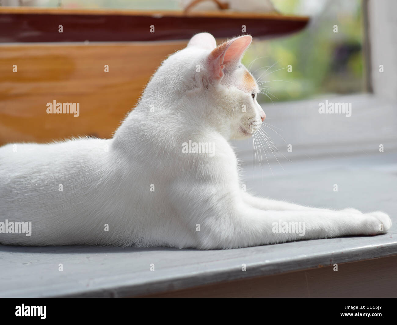 Gazing into the Distance - Stock Image