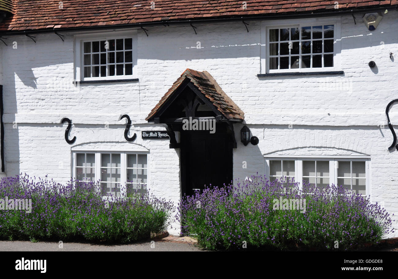 Berks - Sonning - period cottage - red tiled roof - white washed walls - sturdy porch and door - lavender in bloom - Stock Image