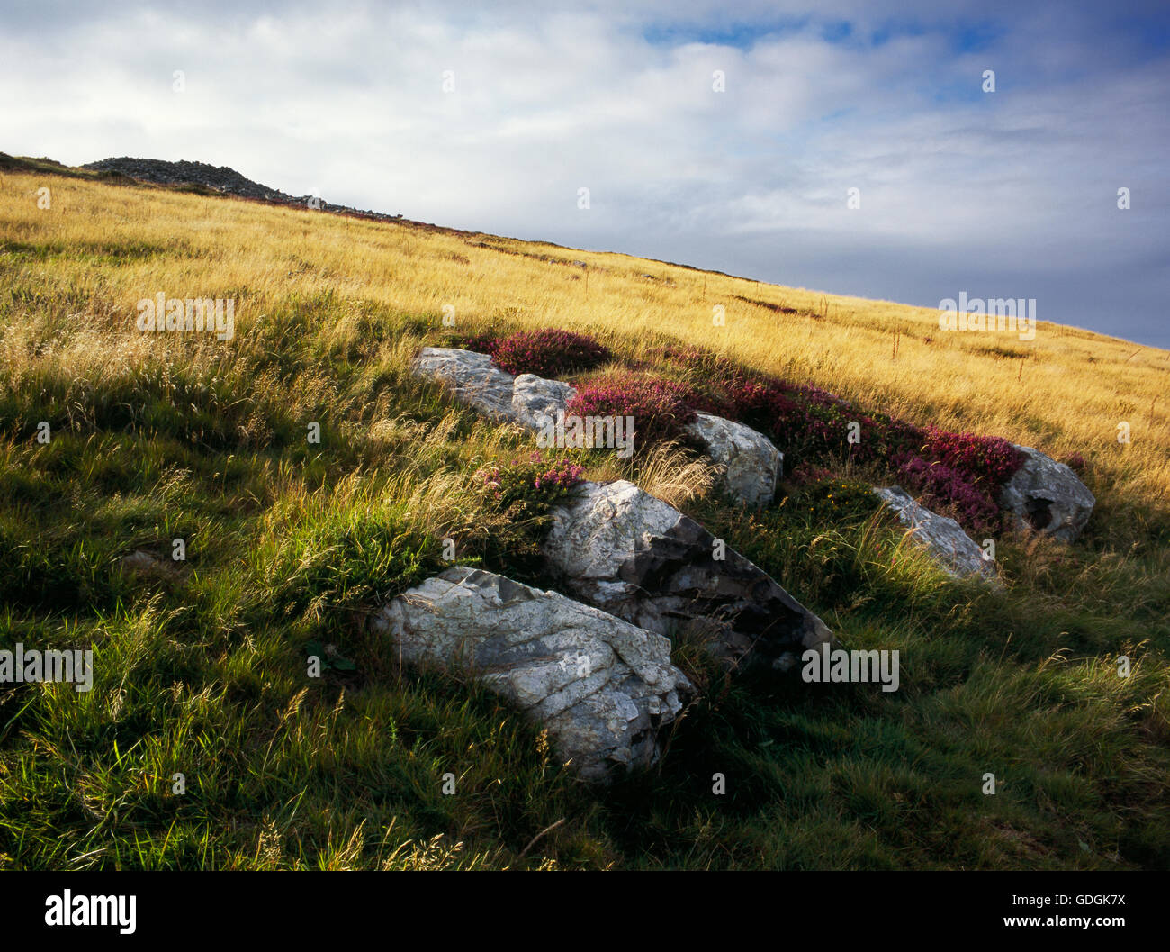 Mynydd Rhiw Neolithic axe factory, Llyn, Gwynedd: an outcrop of fine-grained flinty-textured volcanically-baked - Stock Image
