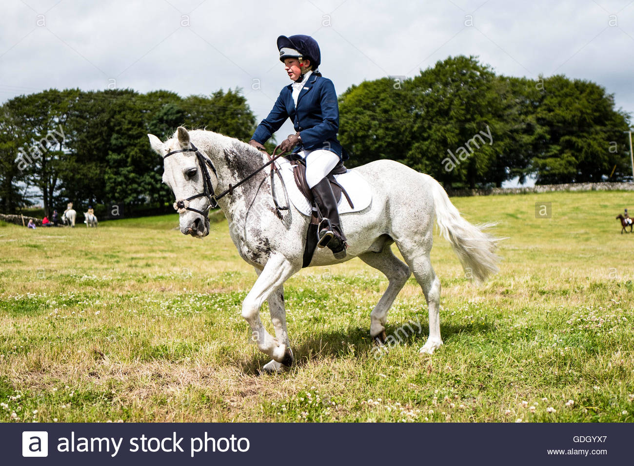 ISEC, Selkirk, Scottish Borders, UK. 16th July 2016. A young girl on a grey pony at the Ian Stark Equestrian Centre - Stock Image