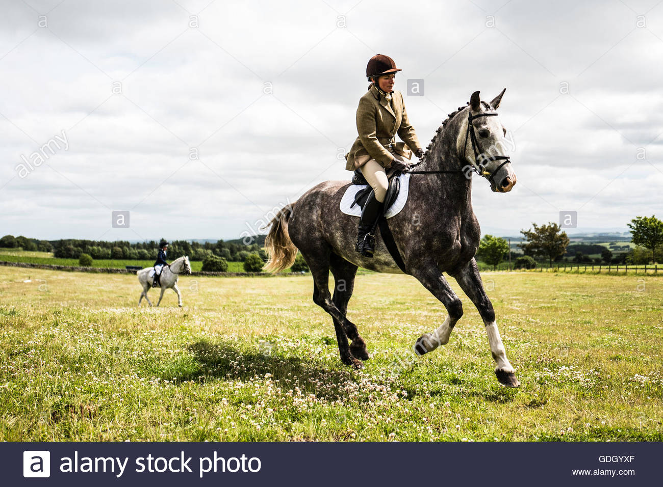 ISEC, Selkirk, Scottish Borders, UK. 16th July 2016. A woman on a grey pony at the Ian Stark Equestrian Centre near - Stock Image