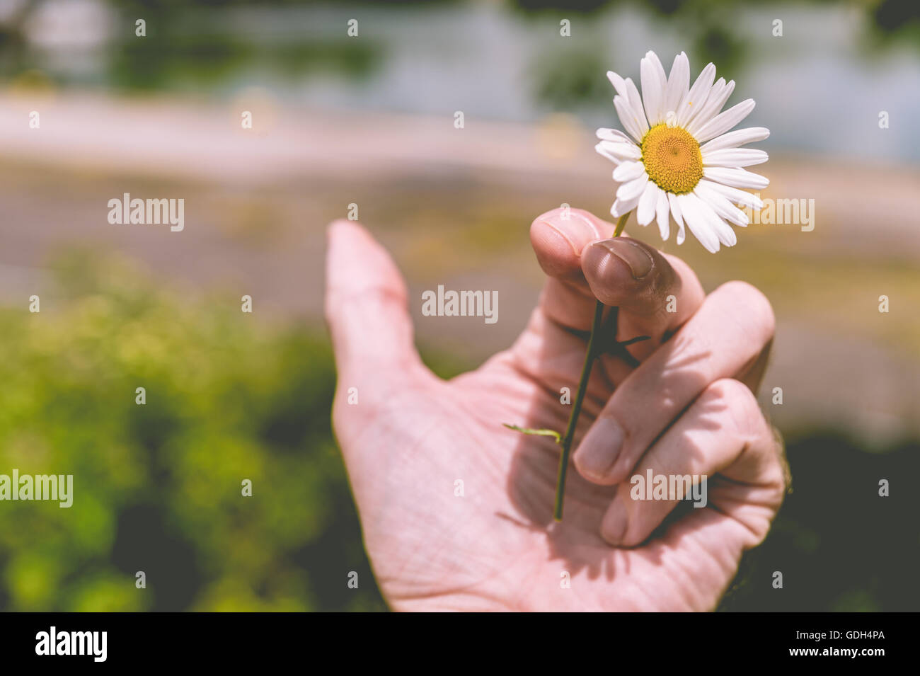 Quit Smoking - Hand holding a flower instead of a cigarette (toned effect) - Stock Image