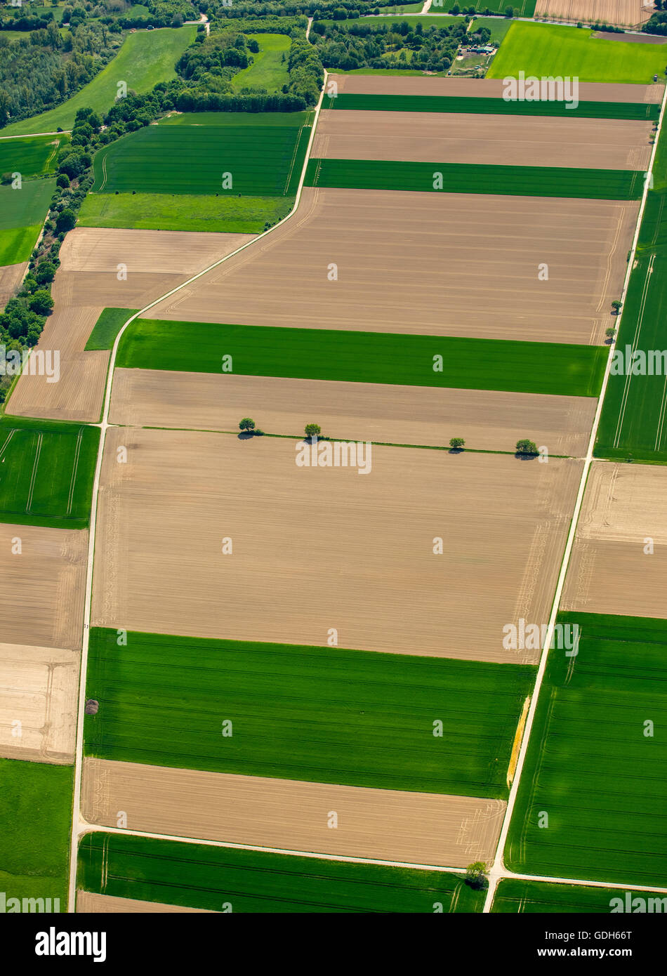 Aerial view, cornfields on the Lower Rhine, crop rotation, corn fields in spring, Neuss, Lower Rhine, North Rhine - Stock Image
